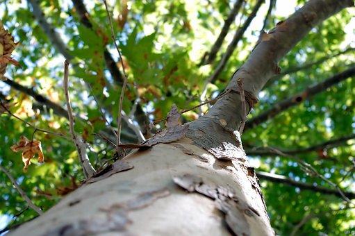 Autumn, Fall, Tree, Season, Change, End, Leaves, Yellow