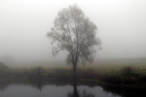 Fog, Autumn, Riverside, Tree, Nature, Mood