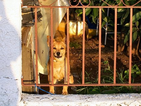 Dog, Pet, Brown, Wistful, Pooch, Behind Bars, Caged