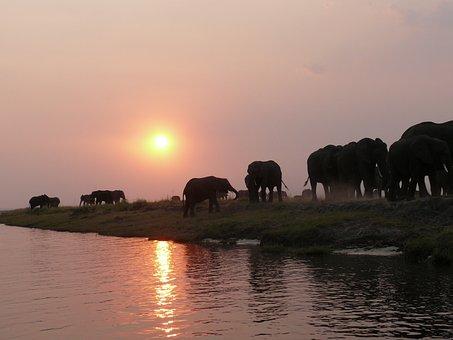 Elephant, Herd Of Elephants, Flock, Safari, Namibia