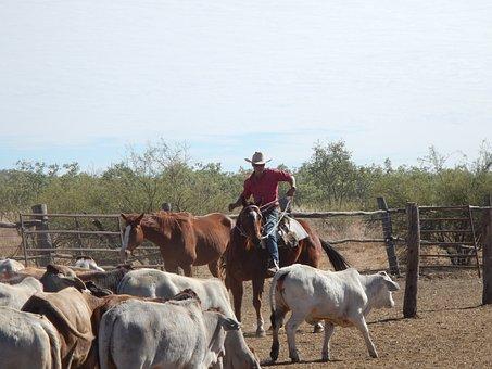 Cowboy, Australia, Outback, Ranch, Farm, Nature, Horse