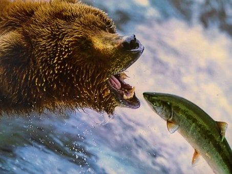 Grizzly, Bear, Dangerous, Animal, Wild Life, Canada