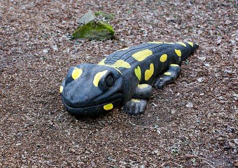 Salamander, Large Salamander, Wooden Salamander