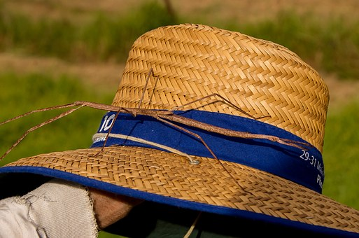 Stick Insect, Insect, Large, Wild, Wildlife, Hat