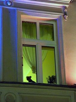 Dog, Longing, Miss You, Wait, Waiting, Doggy, Window