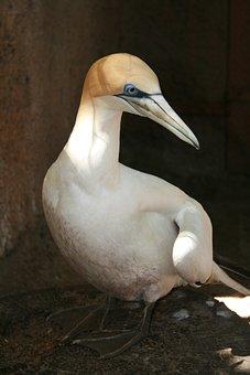 Bird, Melbourne Zoo, Australia