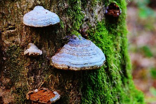 Tree Fungus, Tree, Mushroom, Baumschwamm, Tribe, Log