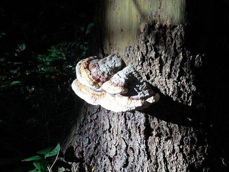 Mushroom, Tree, Tree Fungus, Mushrooms On Tree, Log