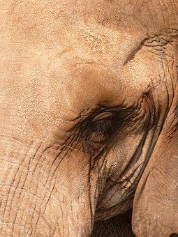 Elephant, Animal, Animals, Africa, Nature, Savannah