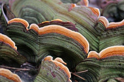 Tree Fungus, Mushroom, Baumschwamm, Autumn