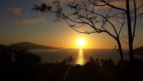 Ocean, Sunrise, Australia, Whitsundays, Tree