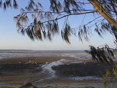 Allocasuarina, Tree, Casuarinaceae, Endemic, Australia