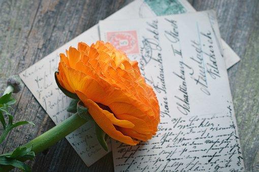 Flower, Ranunculus, Blossom, Bloom, Orange, Petals