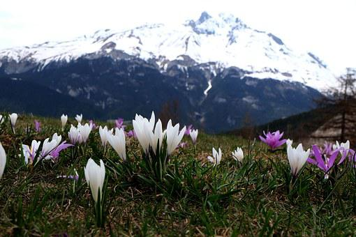 Flowers, Mountain, Nature, Bramans