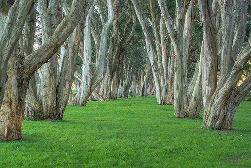 Trees, Park, Centennial Park, Foliage, Natural, Sydney