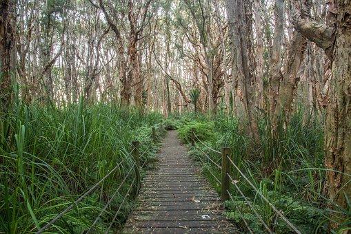 Park, Trees, Path, Centennial Park, Melaleuca Trees