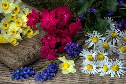 Flowers, Daffodils, Perl Hyacinth, Spring, Daisy, Wood