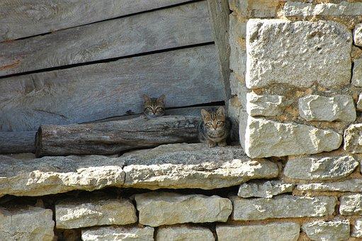 Cat, Farm, Burgundy, Domestic Cat, Wildlife Photography