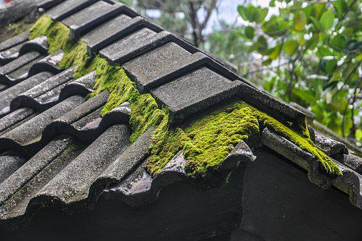 Moss, Roof, Moss On The Roof, Building, Plants, Green