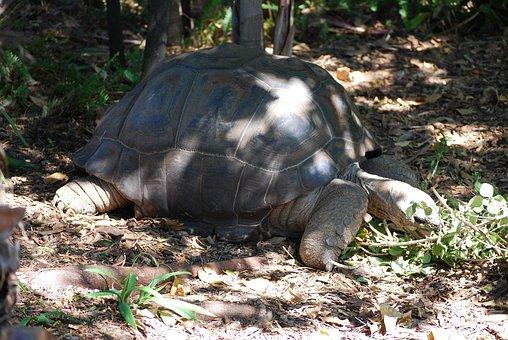Tortoise, Nature, Wildlife, Zoo, Melbourne, Australia