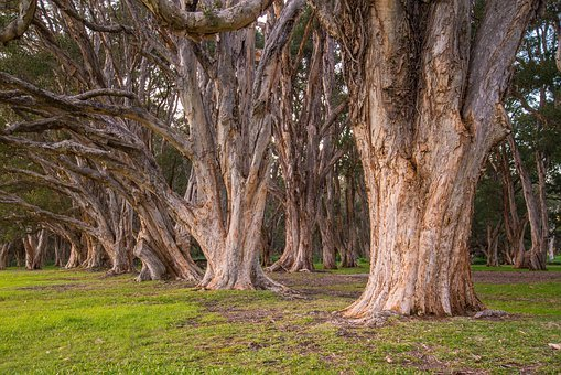 Trees, Park, Botanical, Foliage, Natural, Grass