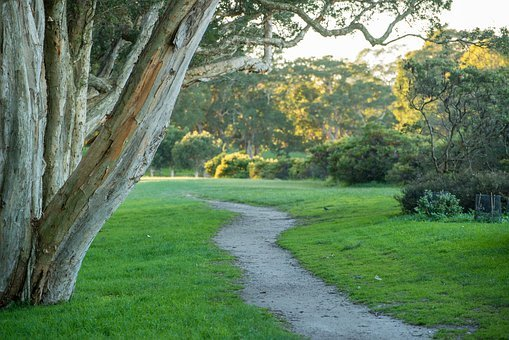 Park, Trees, Grass, Path, Trail, Forest, Outdoor