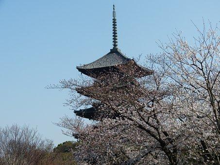 Five-storied Pagoda, Cherry, Spring Kyoto