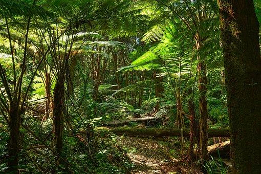 Ferns, Tree Ferns, Australia, Sydney, Rainforest, Tree