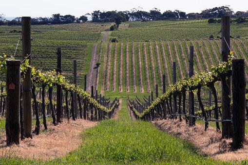 Mclaren Vale, Wine, Vine, Australia, Rural, Agriculture
