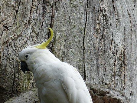 Parrot, Bird, Animal, Plumage, Spring, Head, Bill, Zoo