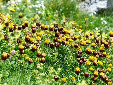 Brown Dress, Flowers, Yellow, Brown, Alpine Brown Dress