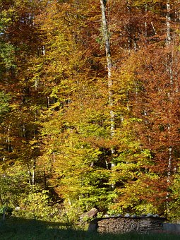 Autumn, Fall Color, Autumn Forest, Forest