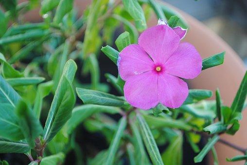 Impatiens, Purple, Flower, Plant, Nature, Bloom, Green