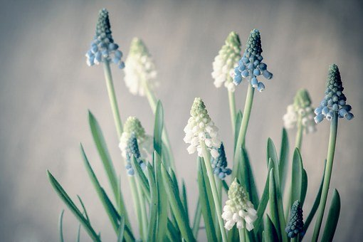 Plant, Flower, Nature, Blossom, Bloom, Spring, White