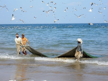 Fishermen, Fishing, Sea, Net, Fishing Net, Catch, Birds