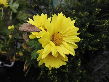 Blossom, Bloom, Nature, Flower, Yellow, Plant, Autumn