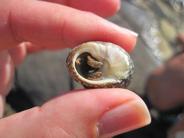Hermit Crab, Clam, Fingers, Sea, Between The Fingers