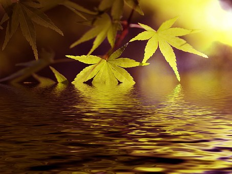 Water, Lake, Maple, Fresh Green, Green, Japanese Maple