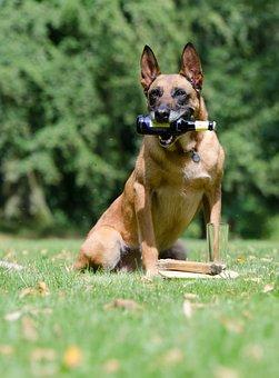 Malinois, Dog Show Trick, Trick, Dog Trick, Dog Tricks