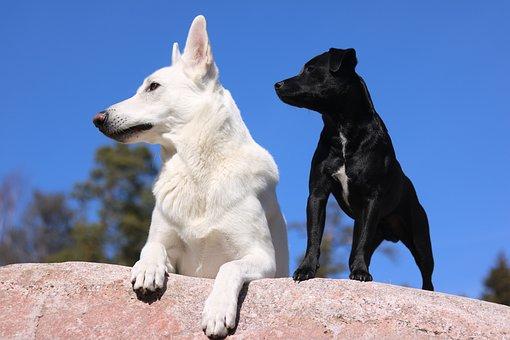 Dogs, Shepherd Dog, Pet, Spring, Terrier