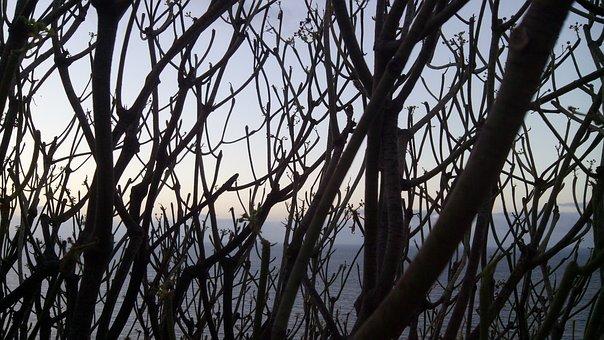 Tabaiba Tree, Between Branches, Sea, Tabaiba