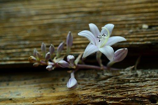 Blossom, Bloom, Tender, Wood, Old, Weathered, Macro