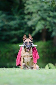 Trick, Dog Trick, Malinois, Dog Show Trick