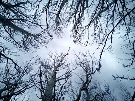 Trees, Sky, Branches, Winter, Blue, Grey, Dark, Tree