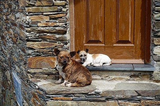 Dogs, Domestic, Waiting, Guarding, Sitting, Canine