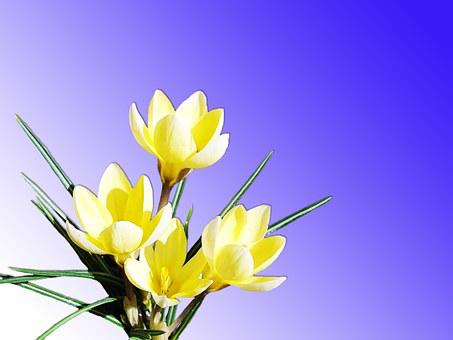 Flowers, Yellow, Nature, Bright, Spring, Bloom