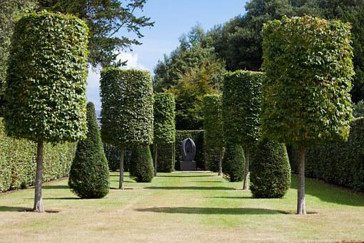 Park, Hedge, Garden, Trees, Trimmed, Cylinder, Cut