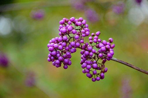 Seeds, Berries, Nature, Plant, Natural, Fresh, Organic