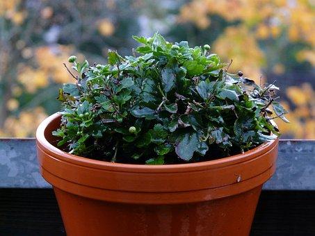 Wet, Blumenstock, Plant, Rain, Rainy, Bad Weather