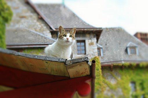 Cat, Animal, Pet, Curious, Domestic Cat, Attention